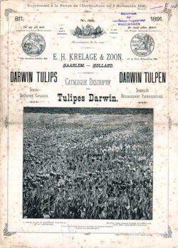 Dette katalog fra 1891 kunne måske imponere med et foto. I dag er der ikke noget kunstnerisk over s/h blomsterbilleder.