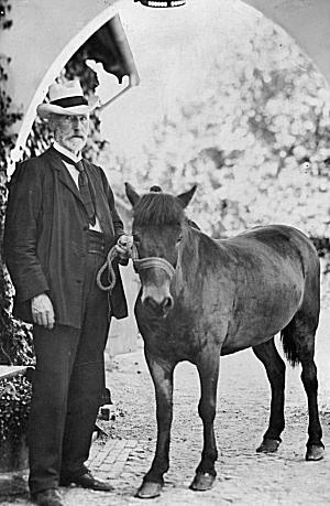 urban og pony