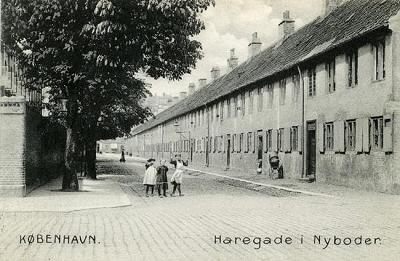 Haregade. Postkort.